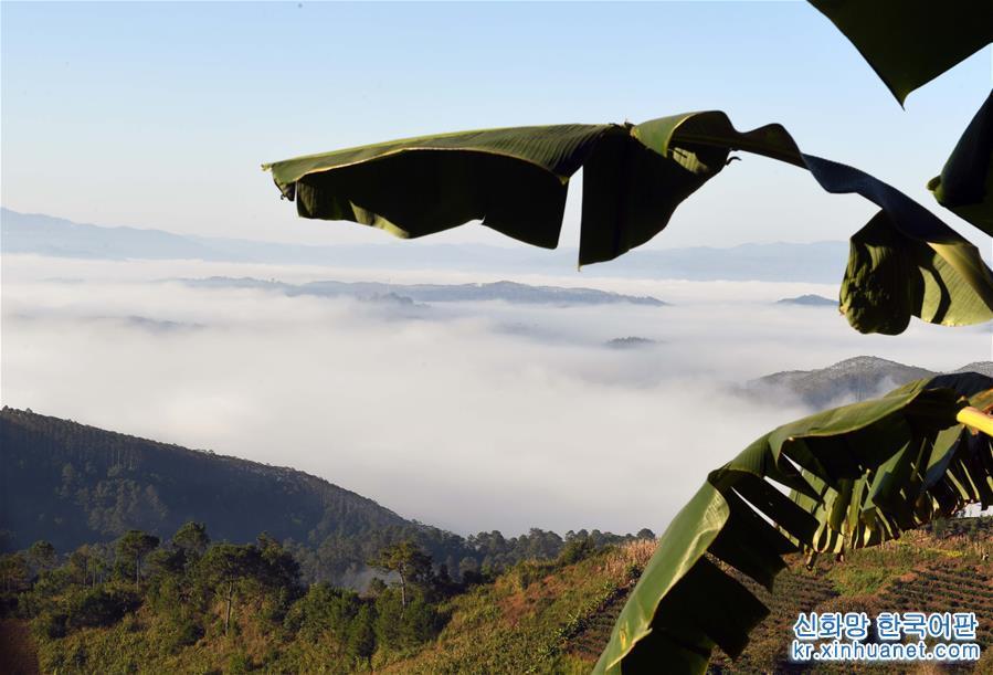 란창 라후족 자치현 주징향 산천의 운해(11월28일 촬영)<br/>  생태 환경이 양호한 윈난성 푸얼(普洱)시 란창(酒井) 라후족 자치현 산골의 맑고 깨끗한 공기속에 운무가 피어 오르는 풍경은 그림처럼 아름답다. [촬영/신화사 기자 양쭝여우(楊宗友)]<br/>