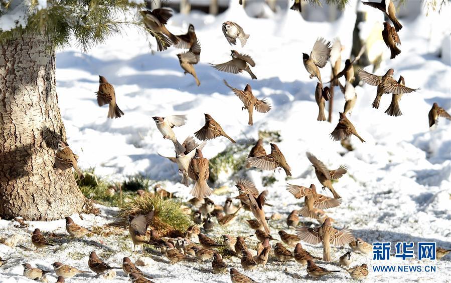 <br/>   12月19日,小鸟在布达拉宫广场上的雪地里撒欢。 12月18日,西藏拉萨市迎来今年入冬以来的首场降雪。19日清晨,拉萨雪后初霁,处处银装素裹,尽显雪域高原之美。 新华社记者觉果摄<br/>