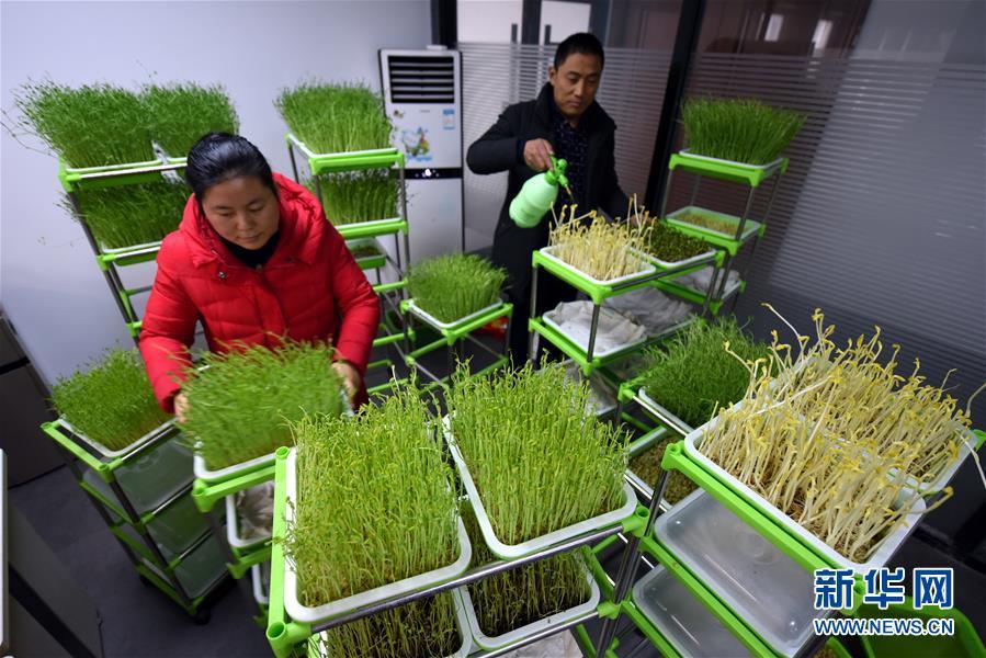 胡天池与农业院校和创新团队合作,研发了27种适合家庭种植的&amp;ldquo;芽苗菜&amp;rdquo;,其中有19种获得国家专利。<br/>