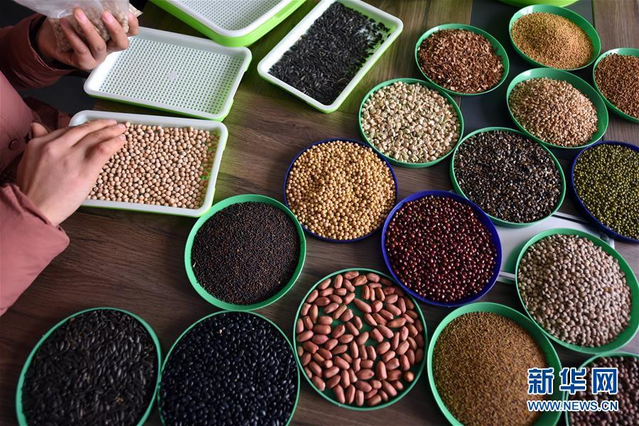 目前,胡天池通过多家电商平台,把&amp;ldquo;芽苗菜&amp;rdquo;系列产品销往全国各地并出口北美。<br/>
