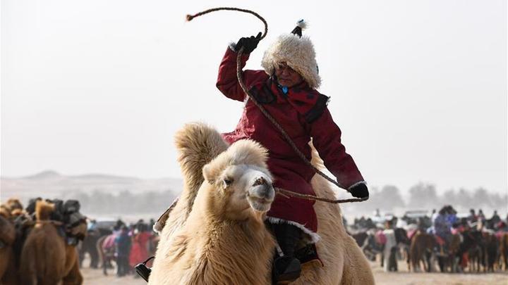 内蒙古自治区第二届骆驼那达慕开幕