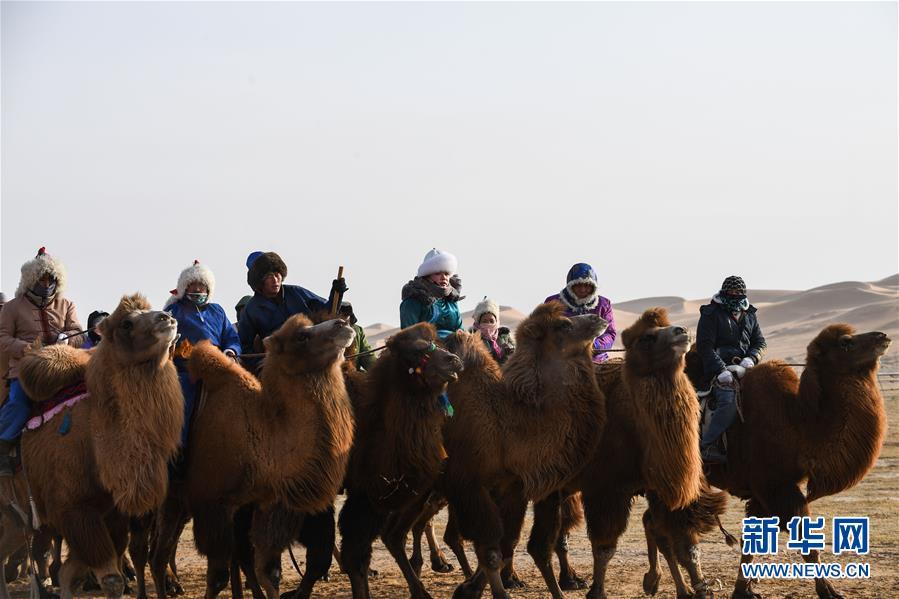 这是开幕式现场的骆驼方队(12月27日摄)。当日,内蒙古自治区第二届骆驼那达慕在阿拉善盟阿拉善左旗开幕。<br/>