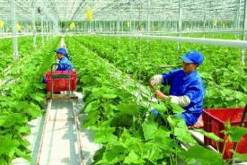 经济日报评论员:坚持农业农村优先发展