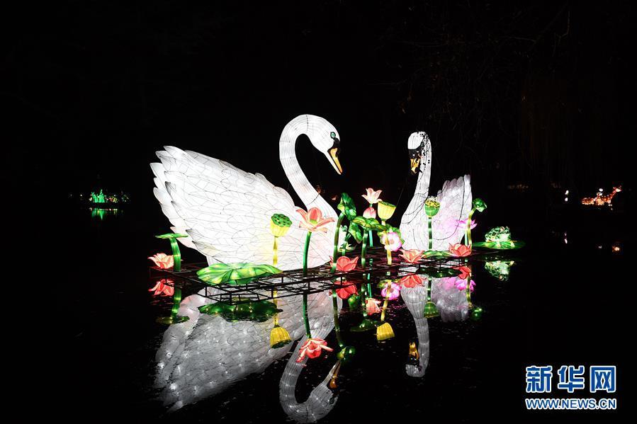 """这是在德国科隆中国彩灯节上拍摄的""""天鹅""""彩灯(1月3日摄)。"""