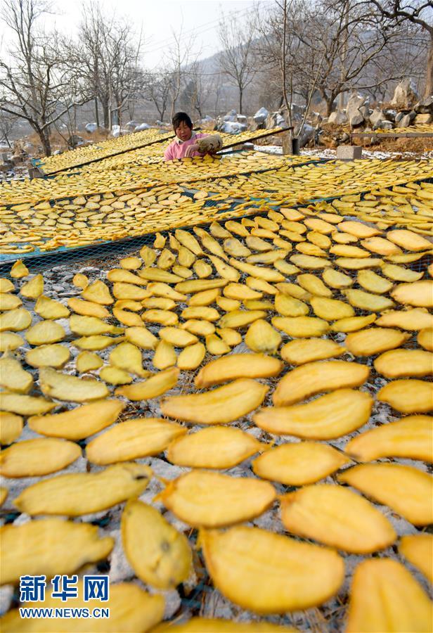 金黄色的地瓜干为冬日山村增添了一抹亮色。<br/>