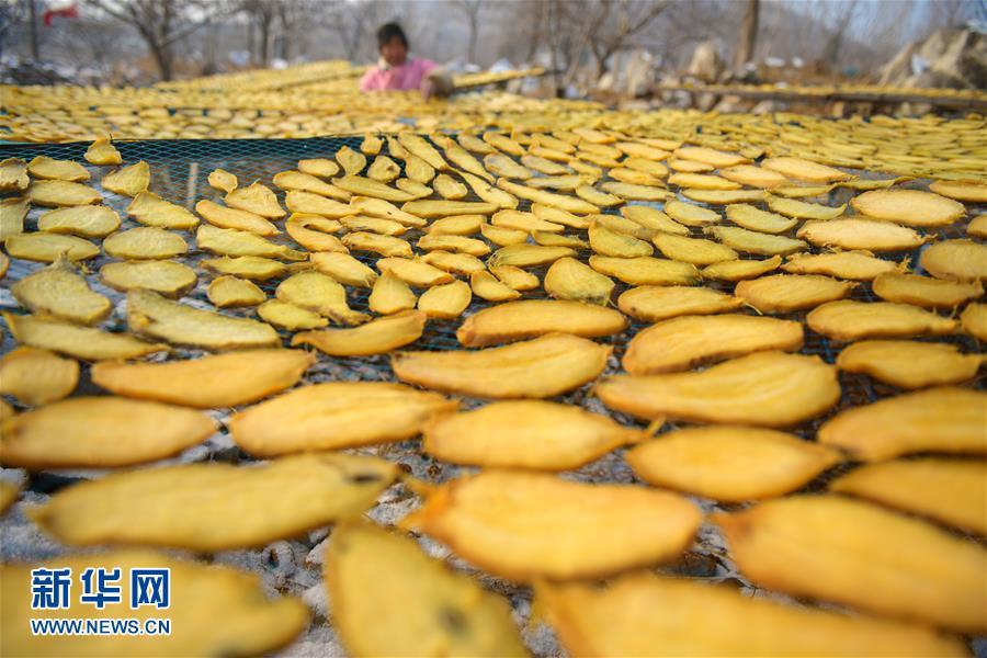 <br/>  时值三九,山东省枣庄市水泉镇农民抓住雪后天晴的有利时机,冒着严寒加工、晾晒地瓜干。<br/>