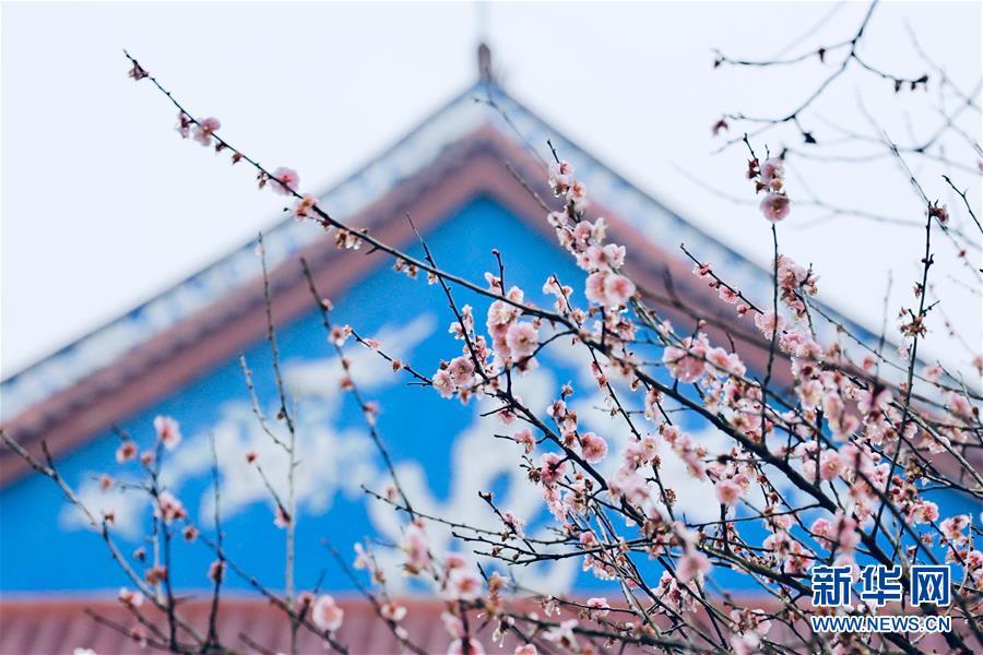 <br/>   2月10日,福州林阳寺内梅花盛开。<br/>
