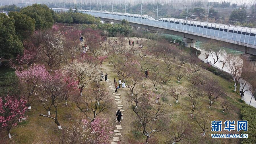 2月25日,游人在合肥市匡河岸边赏梅(无人机拍摄)。 当日,安徽省合肥市天气晴好,匡河岸边的梅花开放,吸引了许多市民和游客。<br/>