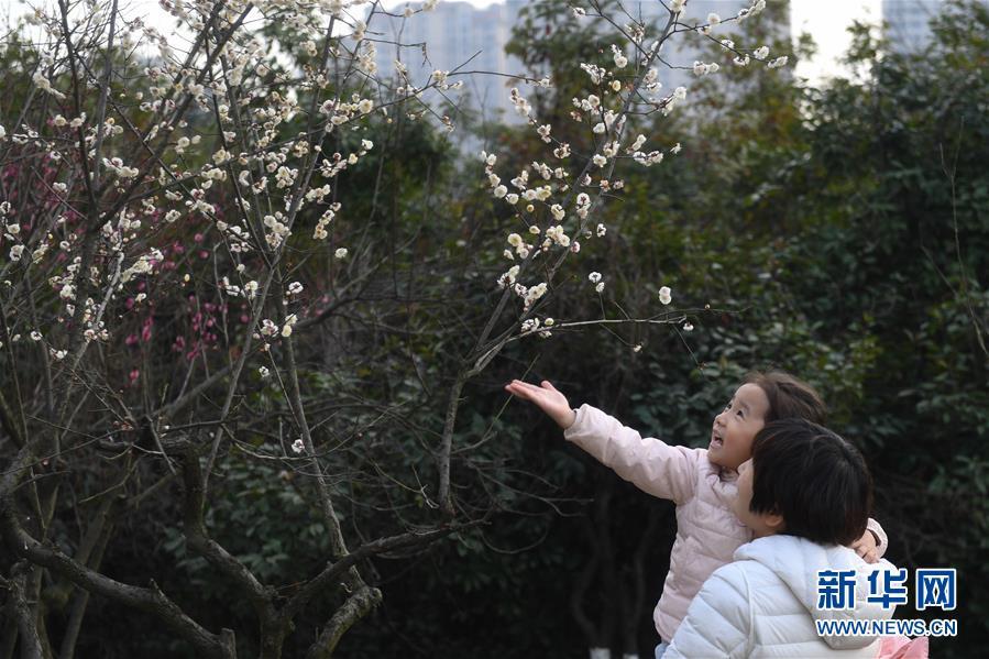 <br/>   2月25日,游人在合肥市匡河岸边赏梅。