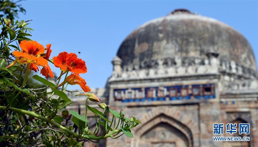 这是3月14日在印度首都新德里的罗迪公园拍摄的盛开的鲜花。<br/>