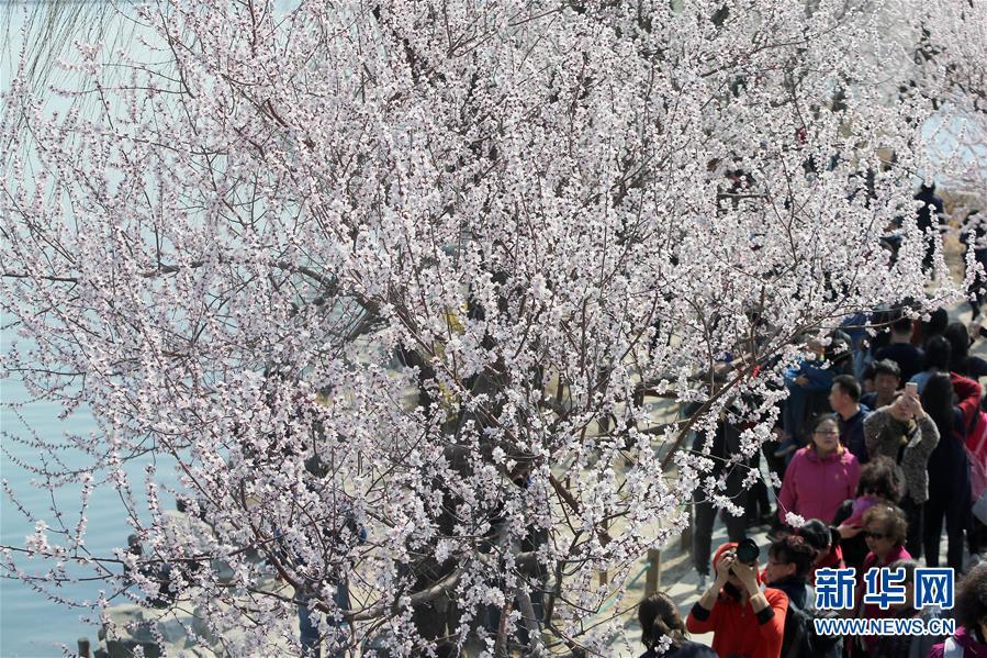 <br/>   3月17日,游客在北京颐和园游览。 春日里的颐和园风光旖旎,游人如织。<br/>