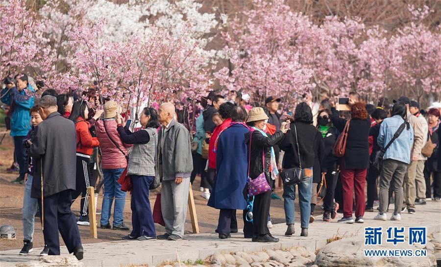 <br/>   3月19日,游客在玉渊潭公园赏樱。<br/>
