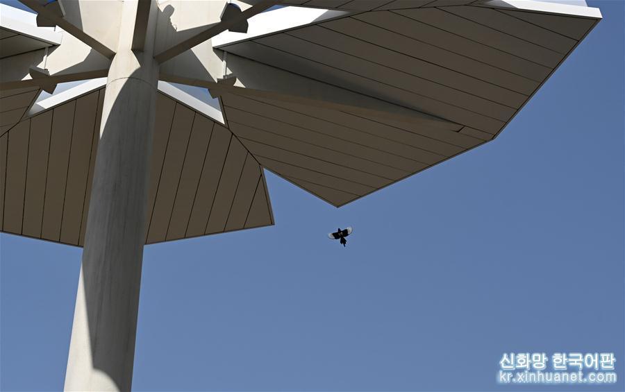 까치 한마리가 베이징세계원예박람회 국제관 상공에서 날고 있다(3월 26일 촬영). [촬영/ 신화사 기자 질량콰이(金良快)]