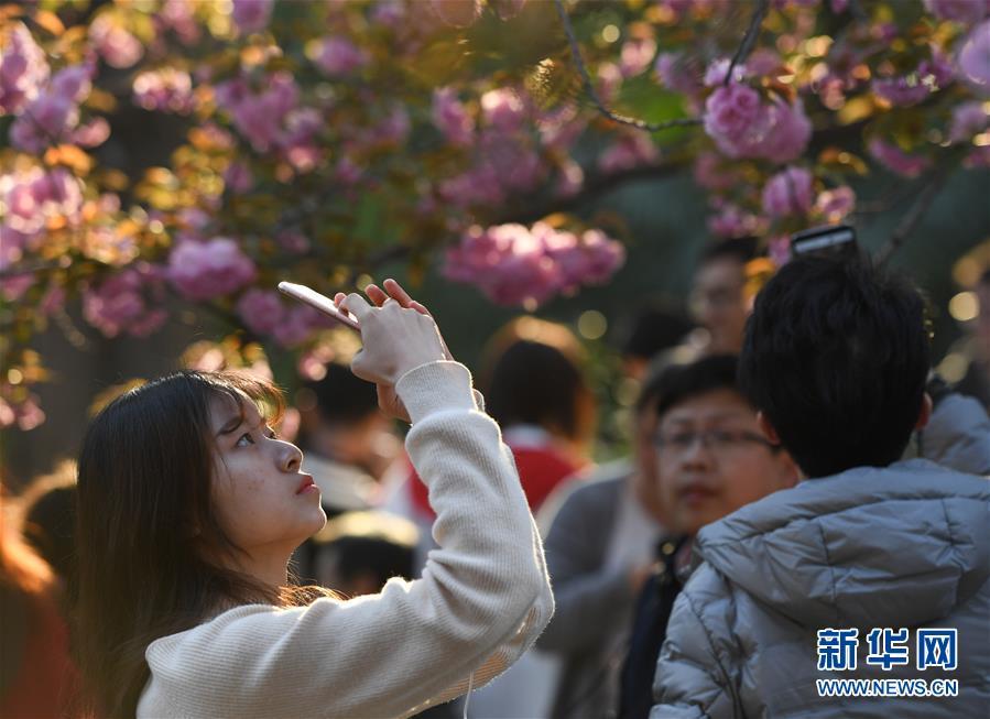 <br/>   3月31日,游客在中国科学技术大学东区拍摄樱花。<br/>