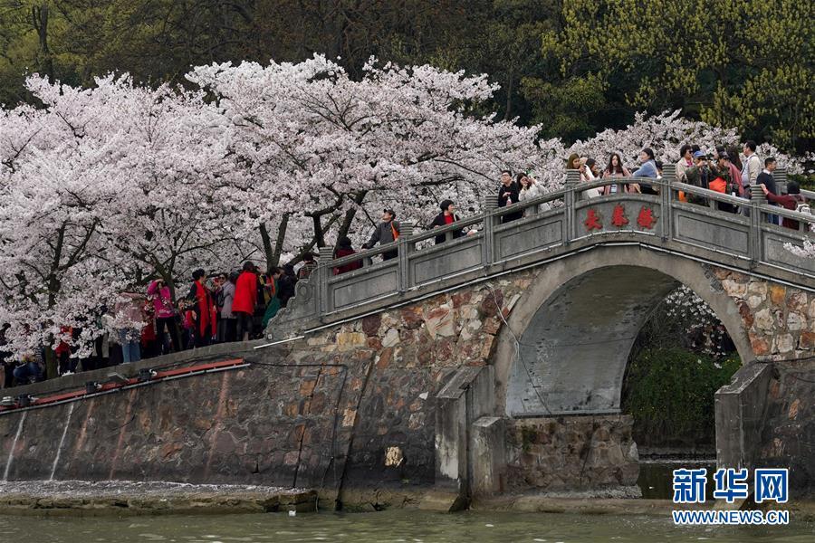 <br/>   4月2日,游客在江苏无锡太湖鼋头渚风景区内赏樱游玩。