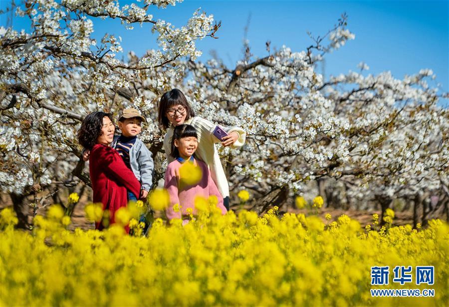 <br/>   4月5日,游客在邯郸市魏县魏城镇东南温村千亩梨花园内踏青赏花。
