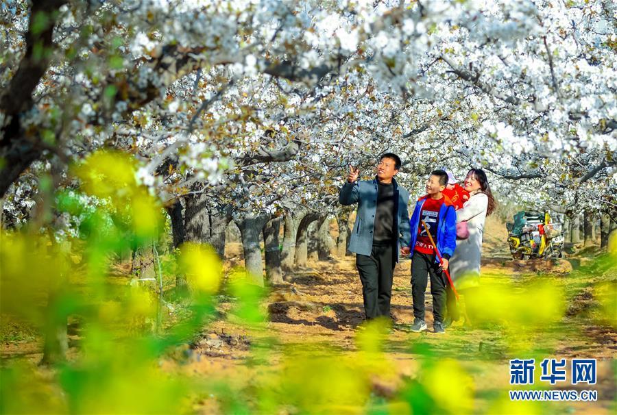 <br/>   4月5日,游客在邯郸市魏县魏城镇东南温村千亩梨花园内踏青赏花。<br/>