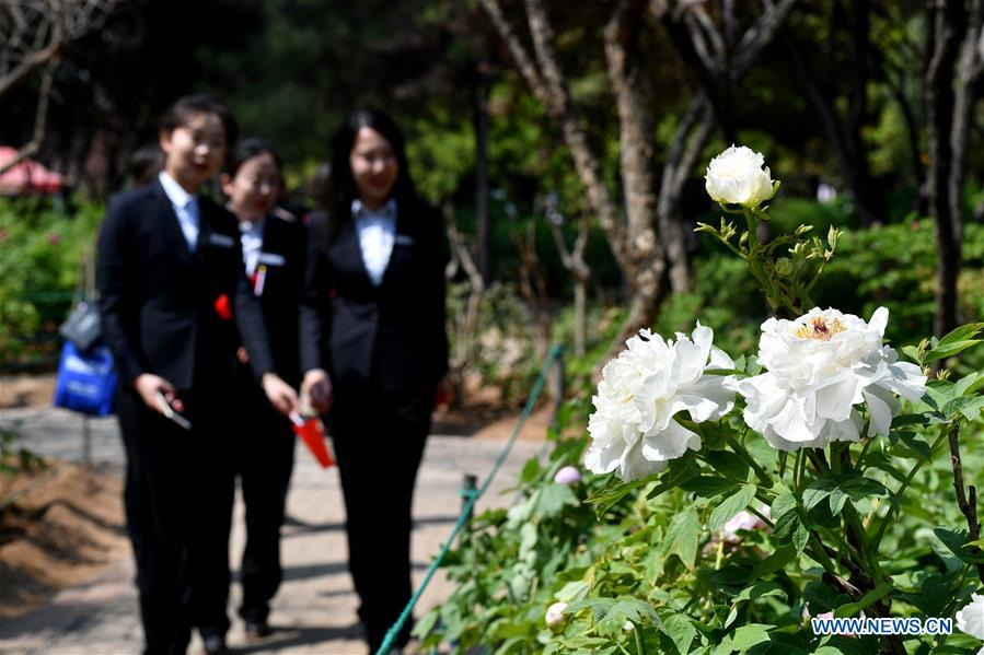Tourists view peony flowers during the 37th China Luoyang Peony Cultural Festival in Luoyang, central China's Henan Province, April 1, 2019. The 37th China Luoyang Peony Cultural Festival was launched Monday at the China National Flower Garden in Luoyang. During the festival, peony species under artificial flowering time regulation have reached their full blooming, while other species left to flower naturally have also begun to bloom. (Xinhua/Li Jianan)<br/>