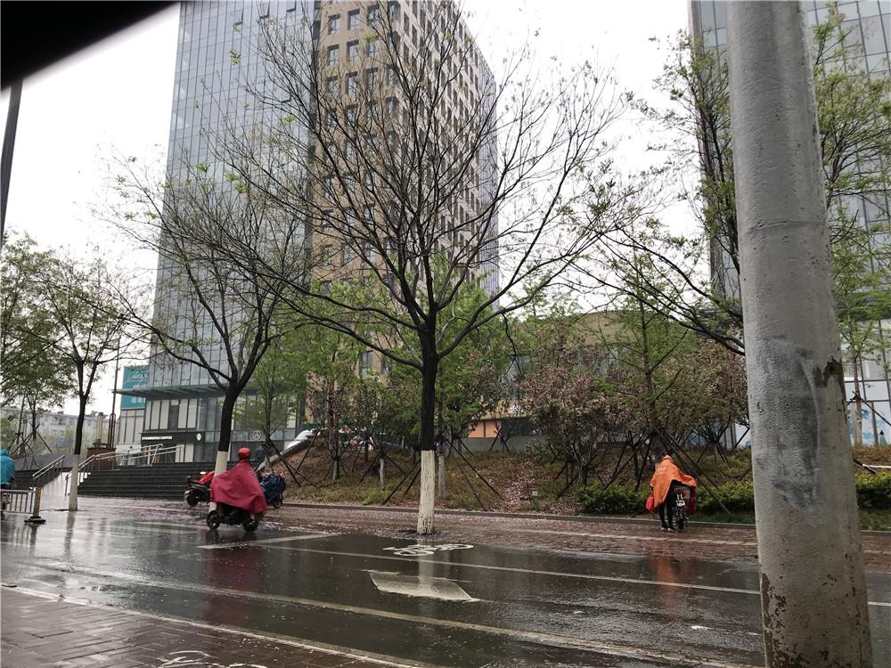 济南喜提春雨! 气温骤降出行不易