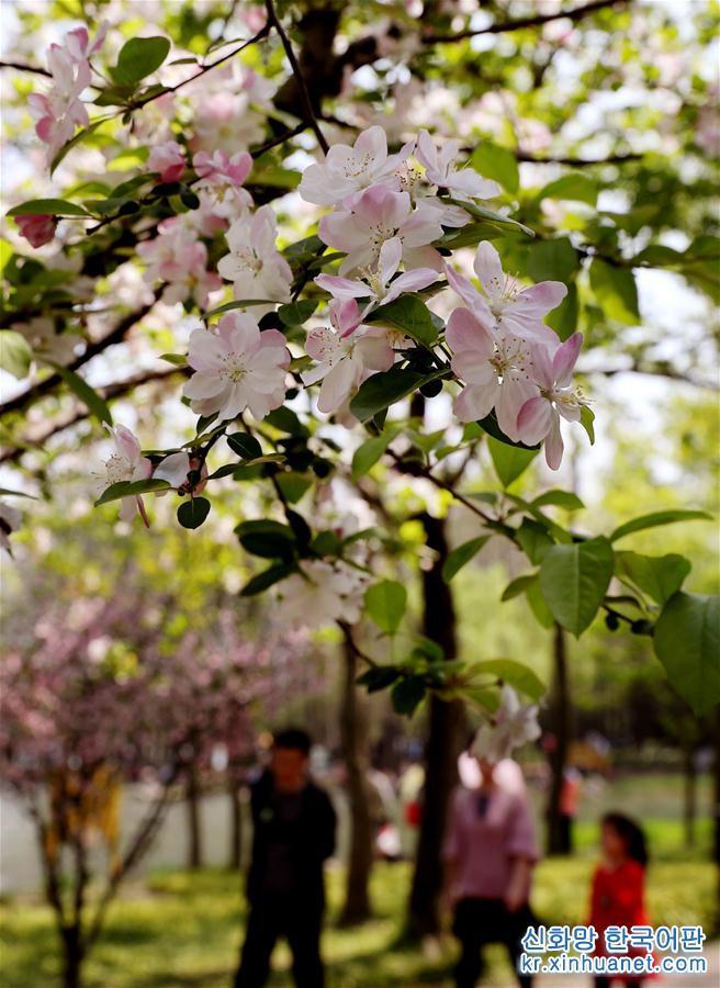 4월7일, 상춘객이 상하이 푸둥(浦東) 세기공원 벤치에 앉아 쉬고 있다. 청명절 연휴에 상하이 여러 공원과 식물원의 해당화가 만발해 시민과 상춘객의 발걸음을 끌었다. [촬영/신화사 기자 류잉(劉穎)]