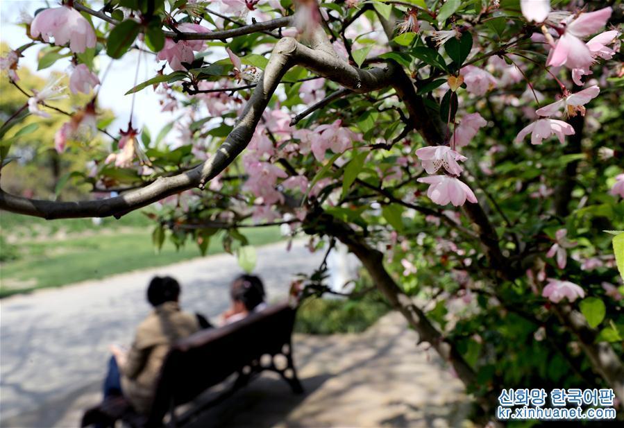4월7일, 상춘객이 상하이 푸둥(浦東) 세기공원 벤치에 앉아 쉬고 있다. 청명절 연휴에 상하이 여러 공원과 식물원의 해당화가 만발해 시민과 상춘객의 발걸음을 끌었다. [촬영/신화사 기자 류잉(劉穎)]<br/>