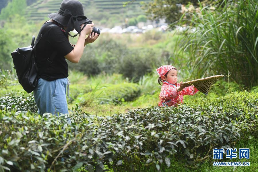 <br/>   4月9日,在武夷山市天心村莲花峰下,游客在为采茶的小朋友拍照。
