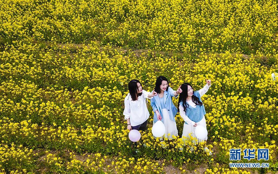 <br/>   4月13日,游客在畅游油菜花海(无人机拍摄)。