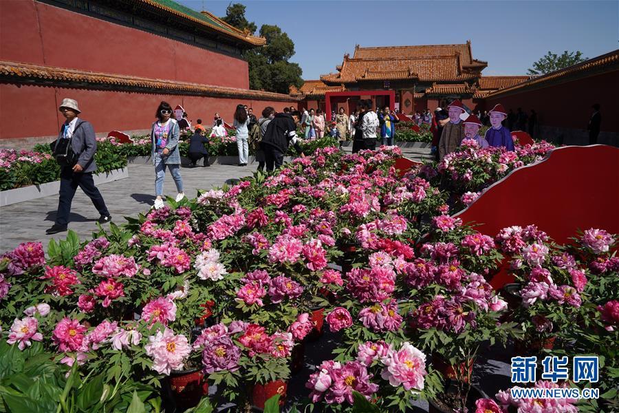 <br/>   4月30日,游客在故宫观赏牡丹。<br/>