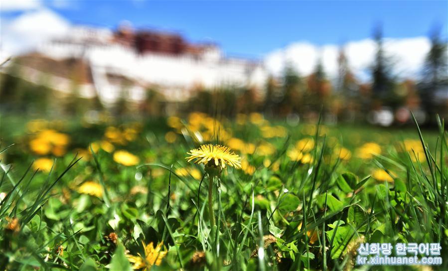 24절기 중 입하(立夏)인 당일, 라싸(拉薩)는 구름 한점 없는 맑고 쾌적한 날씨였다. 사람들은 야외로 나와 햇볕을 만끽하며 즐거운 시간을 보냈다. [촬영/ 신화사 기자 줴궈(覺果)]<br/>