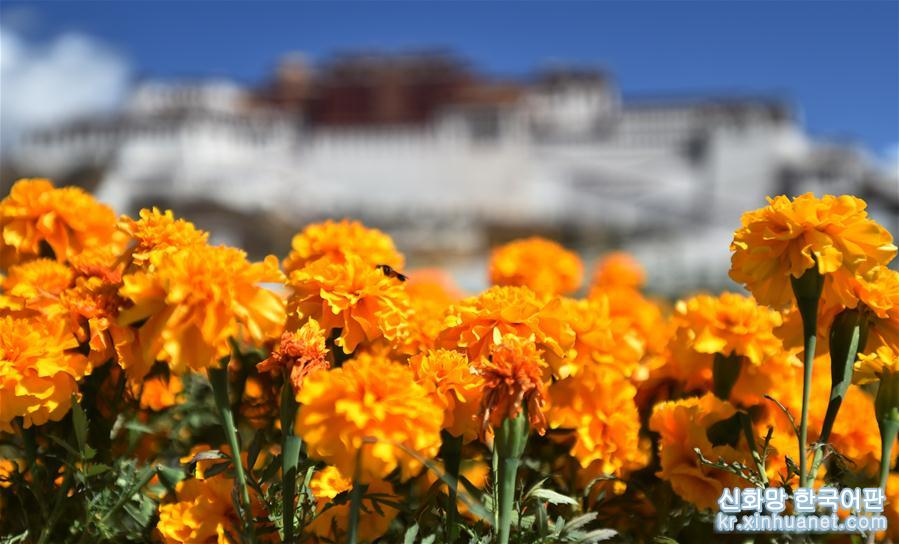 24절기 중 입하(立夏)인 당일, 라싸(拉薩)는 구름 한점 없는 맑고 쾌적한 날씨였다. 사람들은 야외로 나와 햇볕을 만끽하며 즐거운 시간을 보냈다. [촬영/ 신화사 기자 줴궈(覺果)]