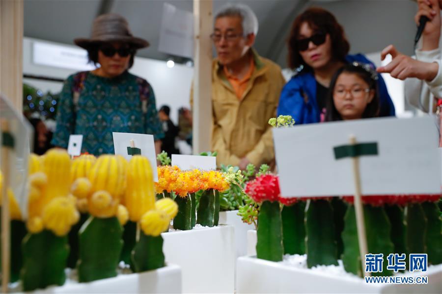 5월 10일 경기도 고양시, 관람객들이 2019 고양국제꽃박람회에서 선인장을 구경하고 있다.