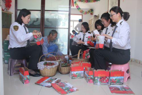 馨飞扬志愿者帮助段文开老人把樱桃装箱