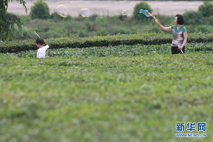 <br/>   5月19日,游客在羊艾茶园内游玩。 初夏时节,位于贵州省贵安新区的羊艾茶园风景如画。 新华社记者 欧东衢 摄