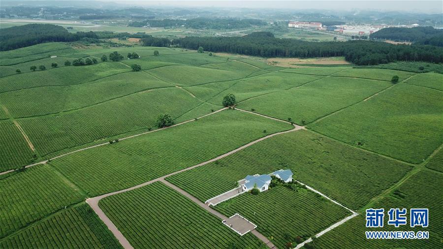 5月19日无人机拍摄的羊艾茶园风光。 初夏时节,位于贵州省贵安新区的羊艾茶园风景如画。 新华社记者 欧东衢 摄<br/>