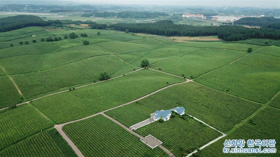 5월19일, 드론으로 촬영한 양아이(羊艾) 차밭 풍경. 초여름, 구이저우서 구이안신구에 있는 양아이 차밭은 초록 물결의 향연을 펼치고 있다. [촬영/신화사 기자 어우둥취(歐東衢)]<br/>