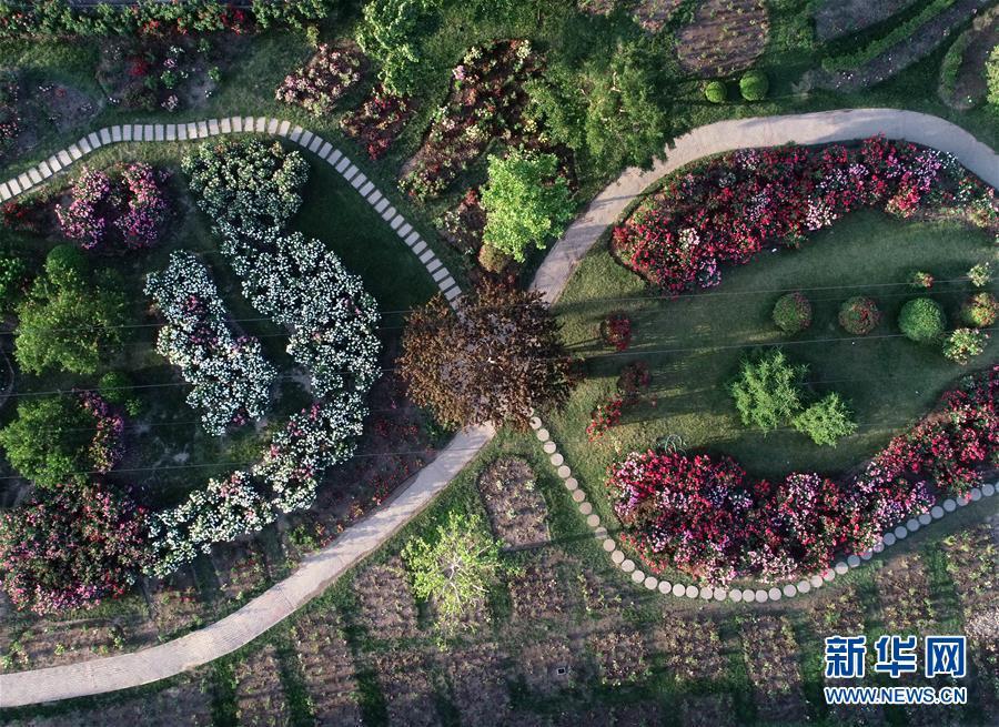 这是5月22日无人机拍摄的泰达园林植物资源库景观。 位于天津经济技术开发区的泰达园林植物资源库曾是一片盐碱滩,被称为&ldquo;绿色植物的禁区&rdquo;。经过近10年绿化建设,已经建成10多个植物专类园,拥有植物6000余种,成为集科研、科普、示范和观赏功能为一体的植物资源库。 新华社记者岳月伟摄<br/>