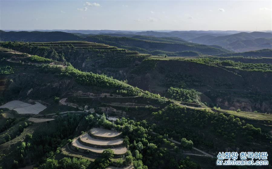 황토 고원 위에 위치한 산시성 옌안시 우치현은 과거 중앙 홍군 장정의 임시 거처였던 곳이자 전국 최초로 경작을 중지하고 산림을 복원한 현이다. 1998년부터 우치현은 산을 봉쇄하고 경지를 조성하고 나무와 풀을 심고 양을 길렀다. 1999년 우치현은 155.5만 묘에 이르는 경작지의 경작을 중지했다. 지난 20년간 우치현이 경작을 중지해 산림을 환원하고 황폐한 산에 숲을 조성한 면적이 245만 묘에 이르면서 현지 생태 환경에 질적인 전환이 나타나 척박하고 황량했던 황토 산비탈이 짚푸른 녹색옷으로 갈아입었다. 나무와 풀이 전체 면적에서 차지하는 비율이 1997년 19.2%에서 현재 72.9%로 상승했다. 연간 강우량은 1997년의 478.3mm에서 2017년 587.5mm로 증가했다. 현지민들은 식량 재배 위주와 넓은 땅에 곡식을 심어도 소출이 적던 전통적인 토지 경영 모델에 마침표를 찍고 주거와 생태 환경을 개선했다. 점차 발전하는 가정 임장(林場) 및 임지 자원과 삼림 생태환경에 기반한 삼림경제가 현지민들이 빈곤에서 벗어나 부자가 되는 새로운 '출구'로 자리잡으면서 농민들의 소득이 안정적으로 증가했다. 2018년 우치현 농민의 1인당 평균 가처분 소득은 1997년의 12배로 껑충 뛴 1만956위안에 달했다. [촬영/신화사 기자 타오밍(陶明)]