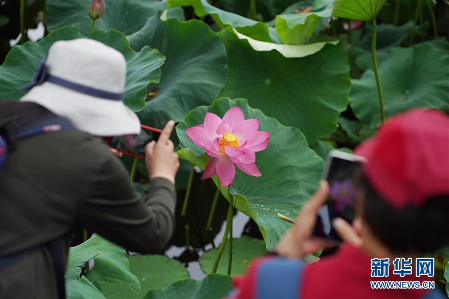 <br/>   6月30日,游人在大观公园内拍摄荷花。 入夏以来,云南昆明大观公园内的荷花陆续绽放,吸引众多市民和游客前来观赏。 新华社记者 秦晴 摄
