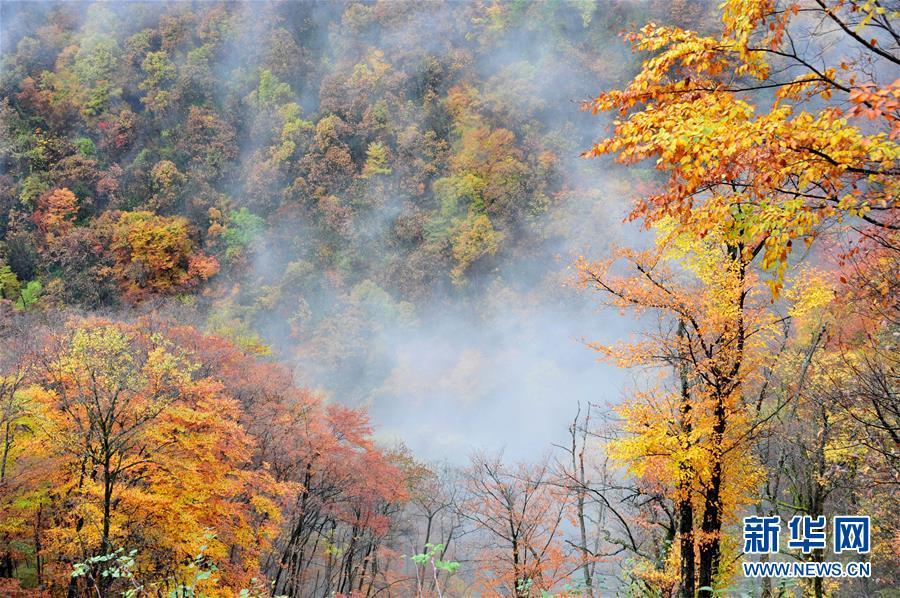 2014년 11월 1일 촬영한 선눙자(神農架)의 가을 풍경 [사진 출처: 신화망]<br/>  후베이(湖北)성은 중국 중부, 창장(長江)강 중류에 있다. 후베이성은 창장강이 1000km 이상 흐르는 유일한 성으로 수자원이 풍부하고 강을 토대로 발전을 이룩했다. 최근 몇 년간 후베이성은 생태 복원, 환경보호, 녹색발전을 이념으로 창장강 경제벨트의 수준 높은 발전을 이룩했다.<br/>  창장강은 후베이성 경제 발전의 &lsquo;중축선&rsquo; 역할을 한다. 현재 후베이성은 체계적으로 산림, 수자원, 논과 밭, 호수, 초원의 일체화 복원 사업을 진행하고 있다. 또한 창장강 방호림 건설, 수토 유실 관리, 습지 보호 등의 프로젝트를 통해 창장강 환경과 수질 개선을 도모하고 있다. 후베이성은 빠르게 움직이고 있다. 창장강 연선을 따라 철수하는 화공기업 등 후베이성은 새로운 녹색 생태계를 구축해 창장강 중류의 생태환경을 보호하고자 한다.<br/>  베이징세계원예박람회는 7월 4일부터 6일까지 &lsquo;후베이성의 날&rsquo; 행사를 개최했다. 후베이성은 &lsquo;푸르른 산과 물&rsquo;이 보여주는 아름다움으로 세계 각국에서 온 참관객들의 마음을 사로잡고 있다.<br/>