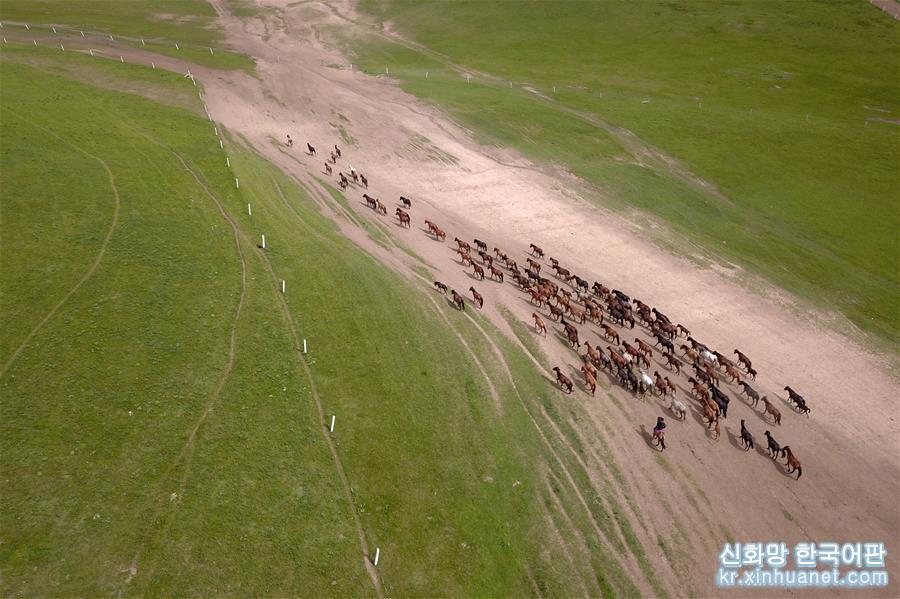 더위가 한창인 7월, 간쑤(甘肅)성 허시(河西)저우랑(走廊) 중부와 치렌산(祁連山) 북쪽 기슭에 위치한 수풀이 무성한 산단(山丹) 목마장에서 말들이 무리를 지어 울타리 안에서 풀을 먹으며 휴식하고 있다. 소개에 따르면, 산단목장은 서한 시기부터 시작하여 현재까지 2000여년 동안 말을 기르고 있다고 한다.[촬영/신화사 기자 판페이퀀(范培珅)]<br/>