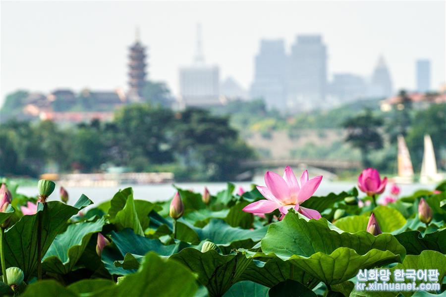 7월23일 난징 쉬안우후 공원에서 촬영한 연꽃 [촬영/신화사 기자 리보(李博)]<br/>