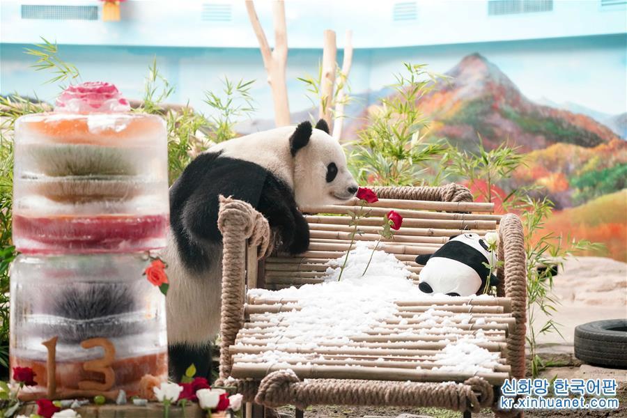 8월 12일 판다 쓰자는 중국 야부리(亚布力) 판다관에서 13살 생일을 보냈다. 쓰자는 판다관 사육사가 준비한 맛있는 음식과 장난감으로 자기의 '생일파티'에서 놀고 먹으며 온갖 재롱을 피웠다. 2006년 8월 12일 쓰촨(四川) 워룽(臥龍) 중국판다보호연구센터에서 태어난 판다 쓰자는 2016년 7월 5일 헤이룽장(黑龍江)성 중국야부리판다관으로 옮겨왔다. [촬영/ 신화사 기자 왕쑹(王松)]