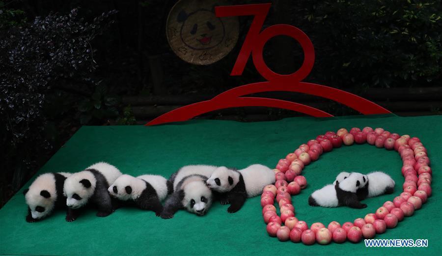 CHINA-CHENGDU-GIANT PANDA-CUBS (CN)