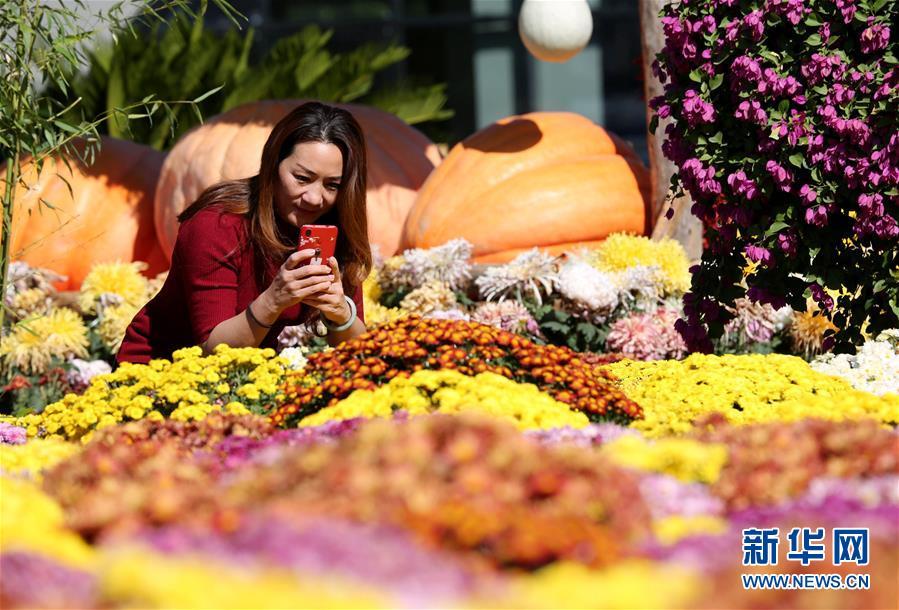 <br/>  10月8日,在大厂回族自治县小厂村,游客在菊花展上拍照留念。 当日是寒露,河北省大厂回族自治县小厂村举办特色菊花展,吸引众多市民和游客前来观赏游玩。 新华社记者 王晓 摄
