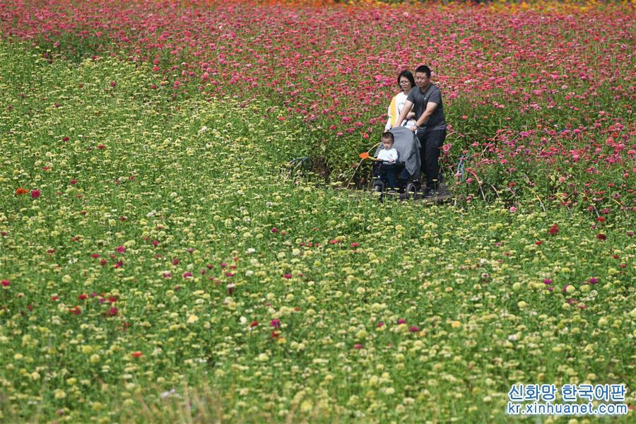 10월9일, 가족 나들이객이 월계화 가든 도심 공원에서 놀고 있다.<br/>  가을이 되면서 안후이성 허페이(合肥)시에 위치한 월계화 가든 도심 공원은 사방이 꽃향기로 가득하고, 알록달록한 꽃들이 눈을 즐겁게 해 나들이객들에게 도심 속 휴양지로 각광받고 있다. [촬영/신화사 기자 장돤(張端)]<br/>