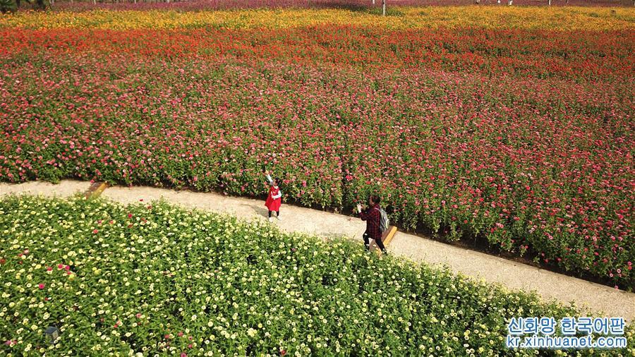 가을이 되면서 안후이성 허페이(合肥)시에 위치한 월계화 가든 도심 공원은 사방이 꽃향기로 가득하고, 알록달록한 꽃들이 눈을 즐겁게 해 나들이객들에게 도심 속 휴양지로 각광받고 있다. [촬영/신화사 기자 장돤(張端)]