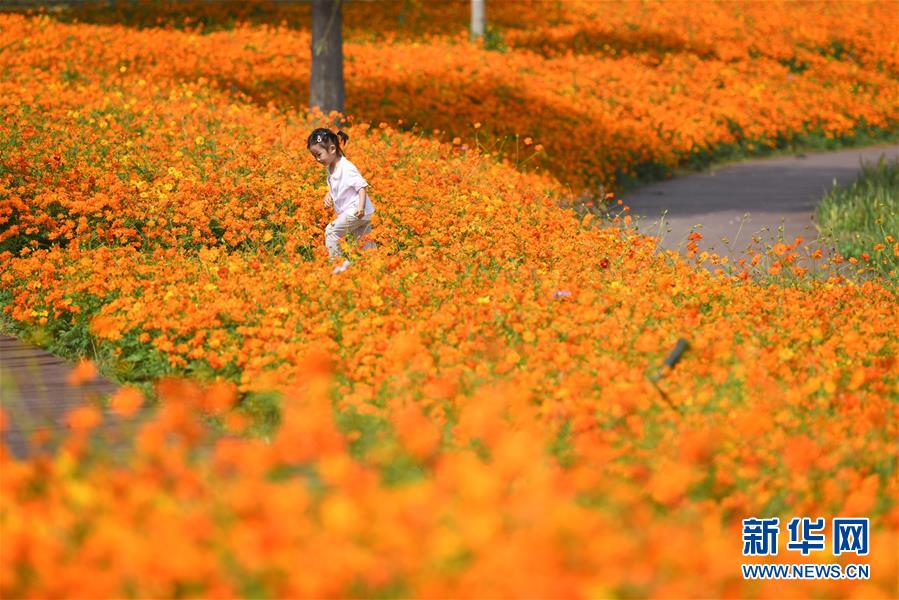 <br/>  10月9日,小朋友在四季花海城市公园游玩。 秋日时节,位于安徽省合肥市的四季花海城市公园花香四溢,色彩缤纷,成为游客和市民休闲游玩的好去处。 新华社记者 张端 摄