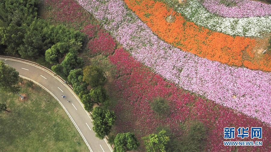 <br/>  10月9日无人机拍摄的四季花海城市公园风景。 秋日时节,位于安徽省合肥市的四季花海城市公园花香四溢,色彩缤纷,成为游客和市民休闲游玩的好去处。 新华社记者 张端 摄