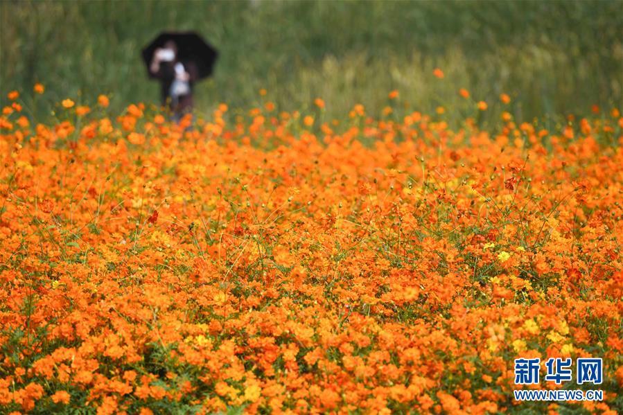<br/>  10月9日,游人在四季花海城市公园拍照。 秋日时节,位于安徽省合肥市的四季花海城市公园花香四溢,色彩缤纷,成为游客和市民休闲游玩的好去处。 新华社记者 张端 摄