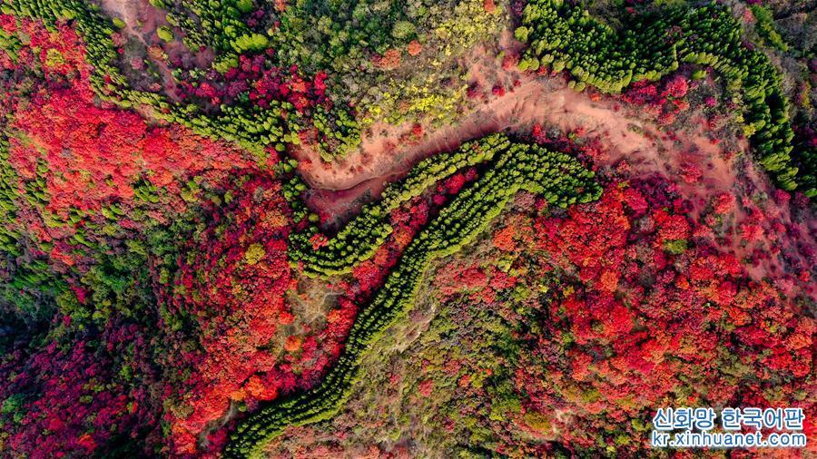 무르익는 가을, 산둥성 지난시 남부 산간 지역의 훙예곡 관광지가 울긋불긋 단풍으로 물들어 고운 가을빛 색채의 향연을 펼치고 있다. [촬영/신화사 기자 궈쉬레이(郭緒雷)]<br/>